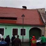 Lelőttek egy városba tévedt medvét Romániában