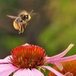A rovarok is képesek új képességeket elsajátítani és továbbadni