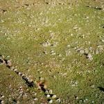 Egy ausztrál bozótosban megtalált helyszín lehet a világ legrégebbi csillagvizsgálója