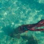 Egy több mint három méteres óriáskalmár haláltusáját fotózták le Spanyolországban