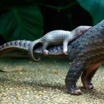 Photo: Aprócska tobzoskák - aranyos fotóválogatás a veszélyeztetett faj legkisebb képviselőiről