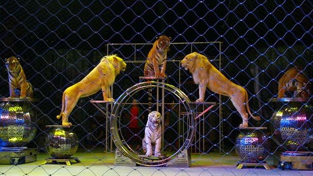 cirkuszi-allatok