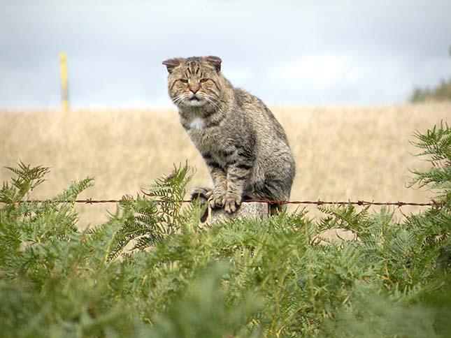 elvadult-macska-5