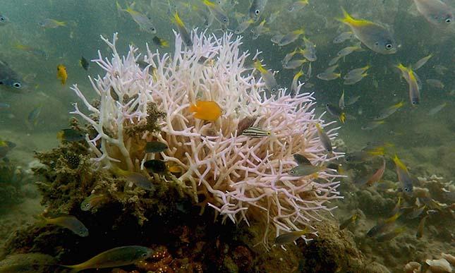 korallzatony-2