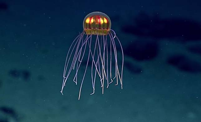 meduza-1