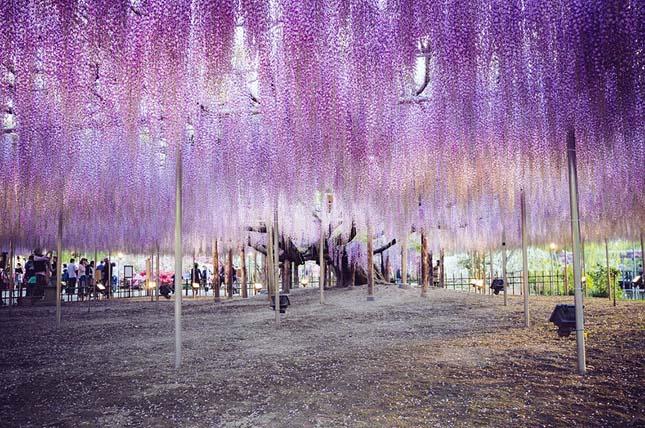 Ashikaga virágpark