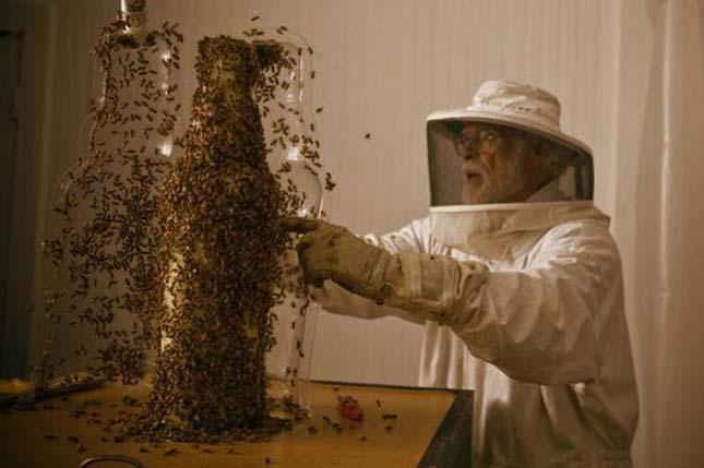 3d nyomtatás méhekkel