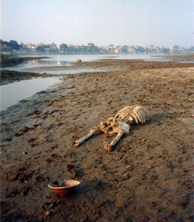 Gangesz