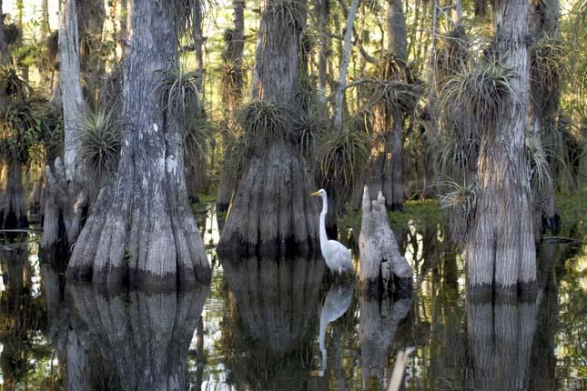 Everglades Nemzeti Park, Florida, Egyesült Államok