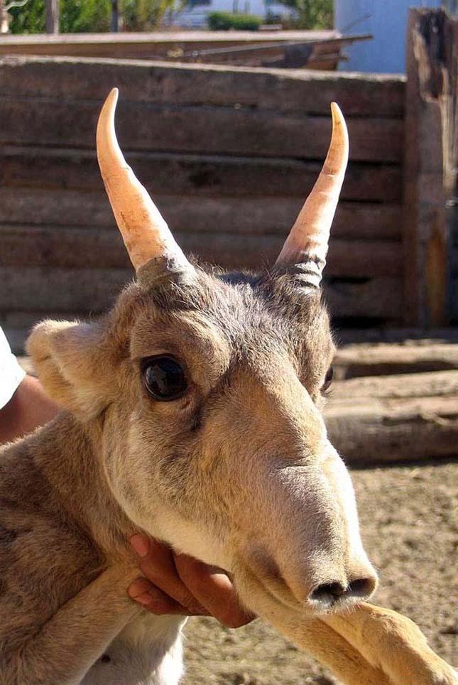 A világ legfurcsább állatai