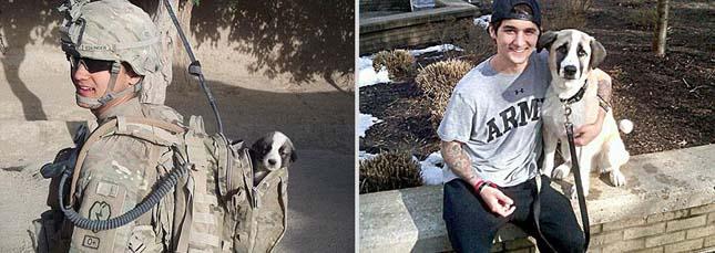 Állatok akkor és most