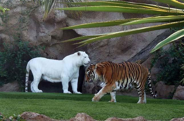 Albínó állatok