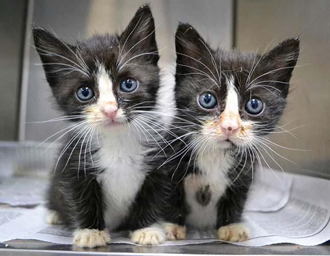 Állati ikrek