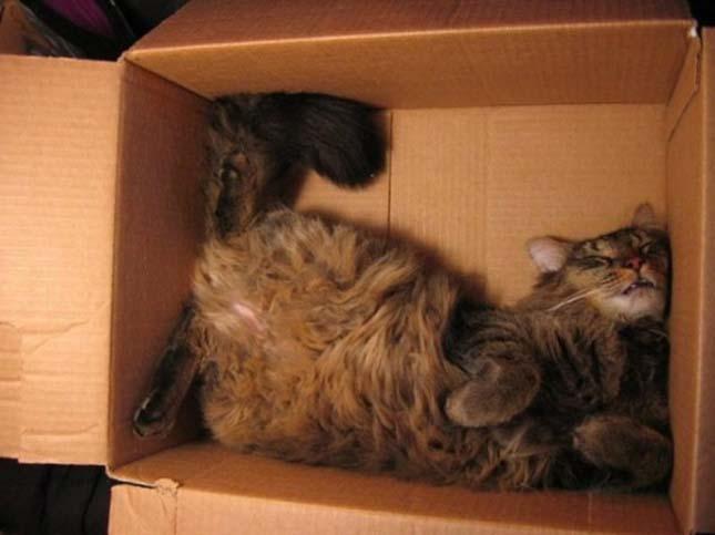 Alvó macskák