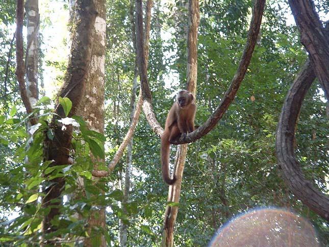 Amazonasi erdőirtás