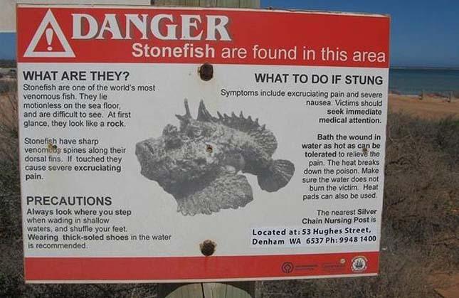 Ausztrália veszélyes állatai