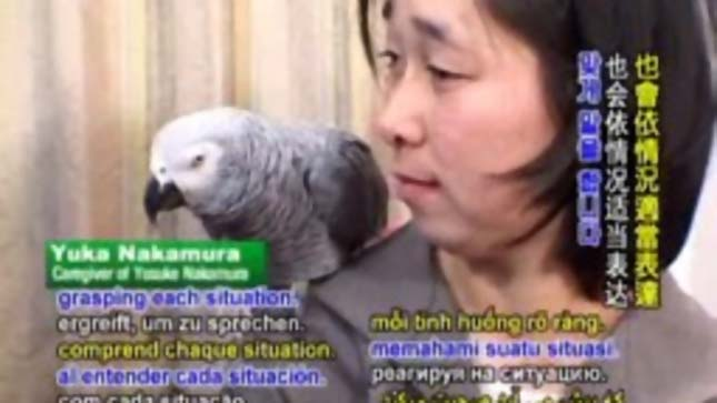 Eltévedt papagáj elárulta a címét