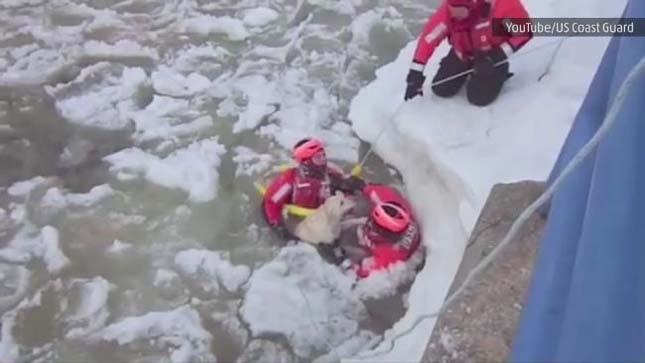Jeges tóból mentték ki a kutyát