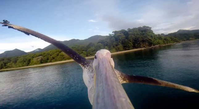 Pelikán repülése