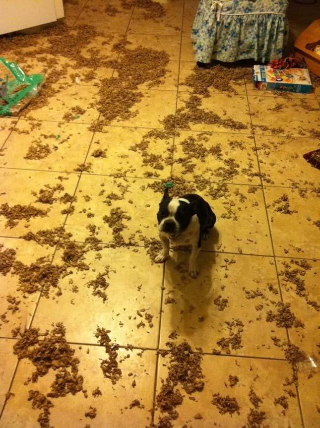 Bűnbánó kutyák