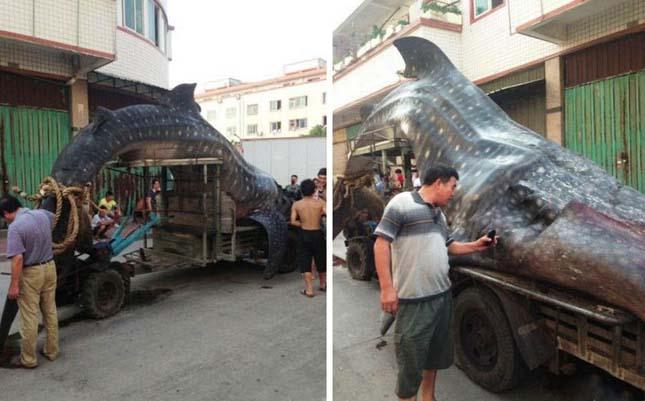 Cetcápát fogtak kínai halászok