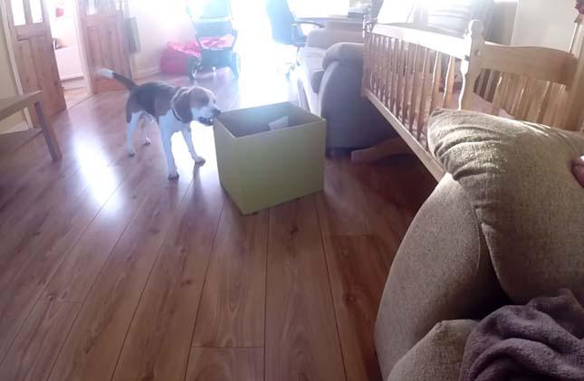 Charlie kutyus