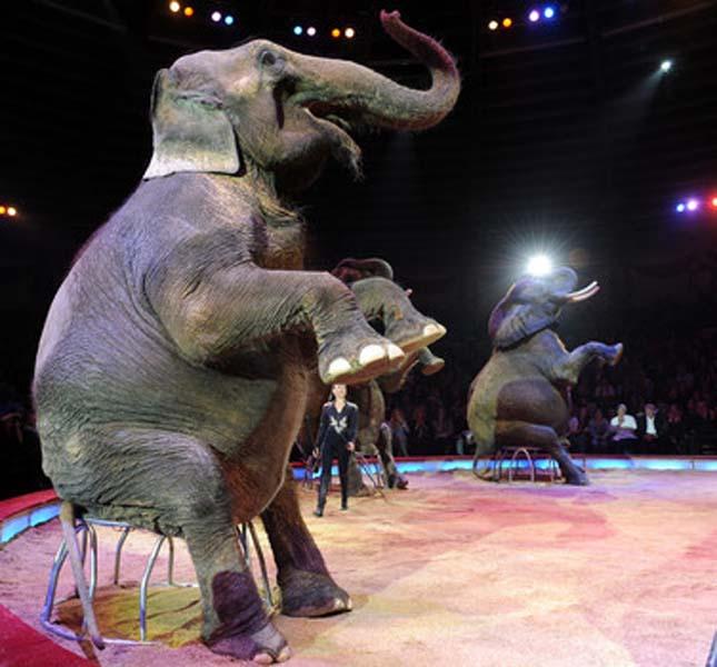 Cirkuszi állatok