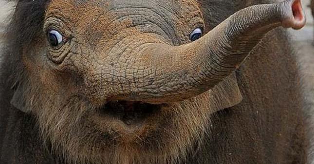 Csodálkozó állatok