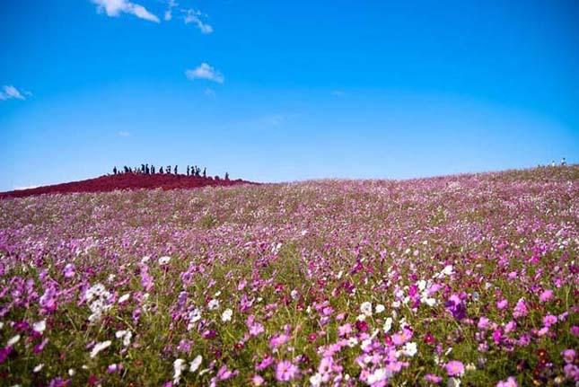 Japán virág park