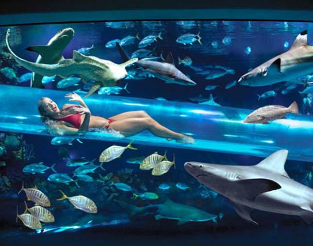 Vízicsúszda a cápák között