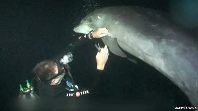 Búvártól kért segítséget egy bajba jutott delfin
