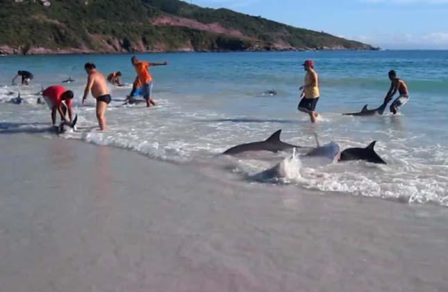 Delfin mentés