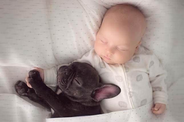 A kisbaba és a francia bulldog barátsága