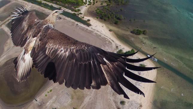 Drón fotóverseny