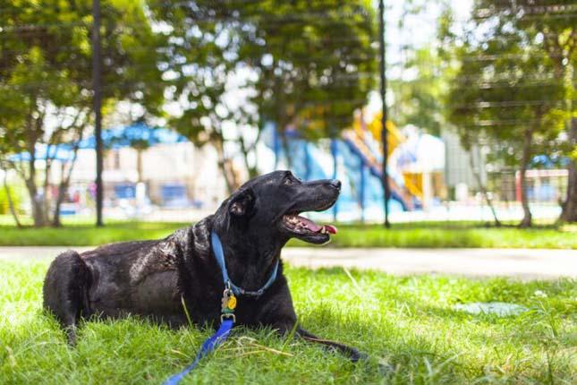 Duke kutya utolsó napja