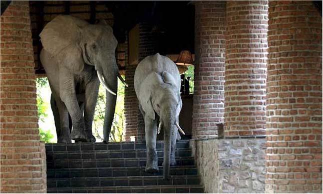 Elefántok a szállodában