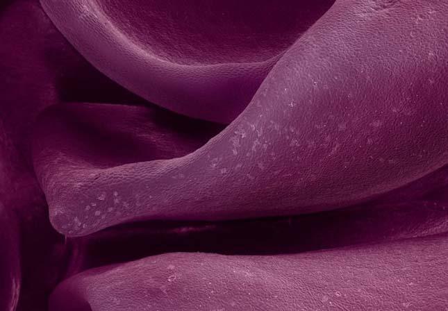 Élelmiszerk mikroszkóp alatt