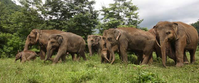 Eelefánt park
