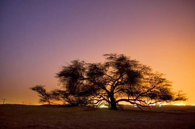 Élet fája