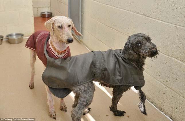 Elhanyagolt kutyák