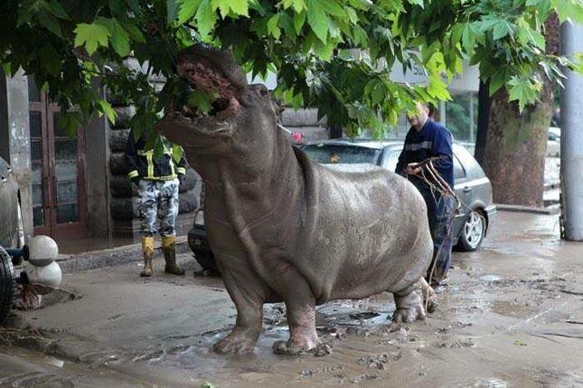 Elszabadult állatok Gróziában