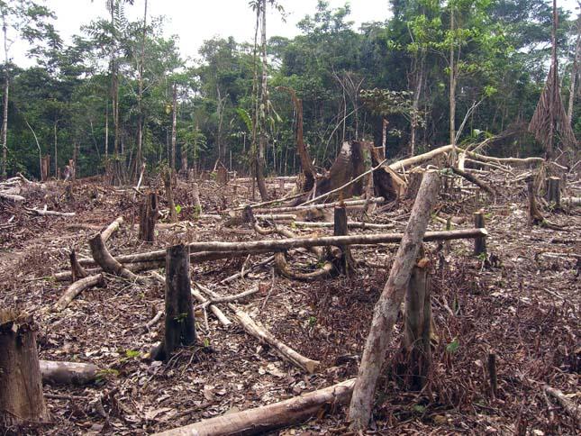 Esőerdők kiirtása