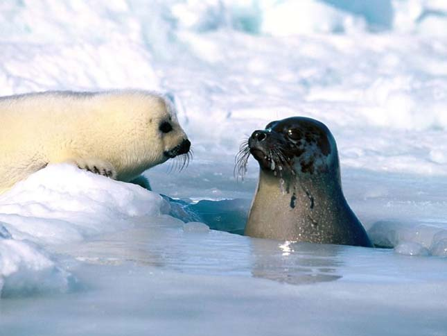 Északi sark állatai