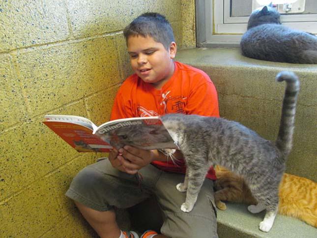 Felolvasás az állatmenhelyen