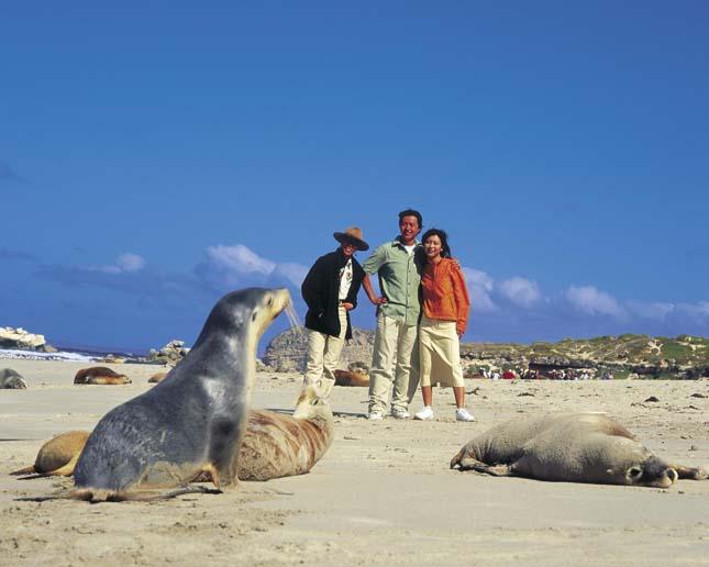 Kenguru-sziget