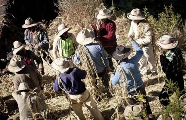 Függőhíd építése Peruban