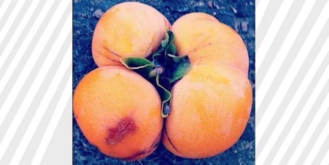 Fukusimai zöldségek és gyümölcsök