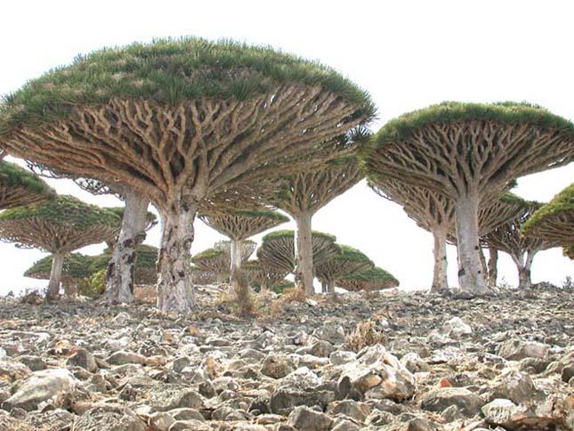 A furcsa növények szigete