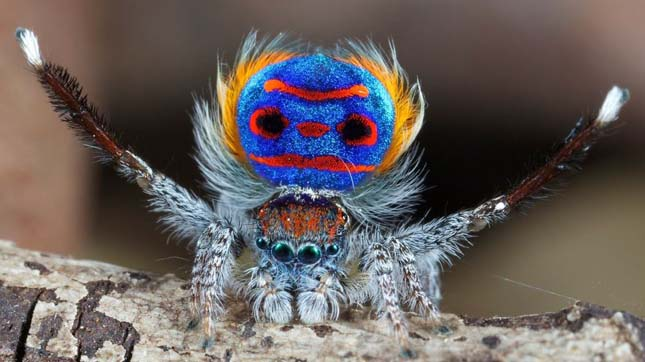 Szokatlan színű állatok