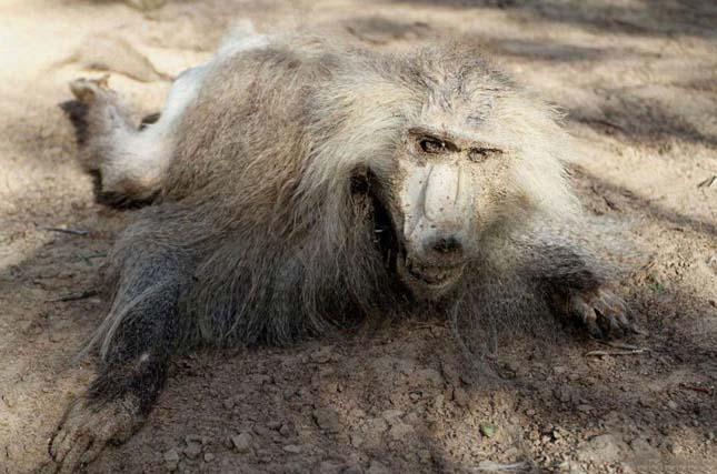 Khan Younis állatkert, Gázia övezet